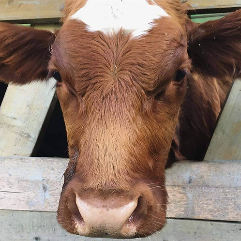 Vet Visit for a Member of the Herd