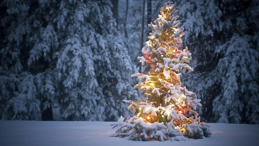 Christmas tree in snow.jpg