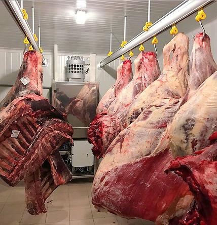 Boucherie Horeca Chambre Maturation Dry Aded Buysse Food Machinery