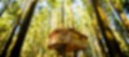 casa arbol pais vasco