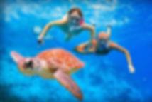 swim turtle.jpg
