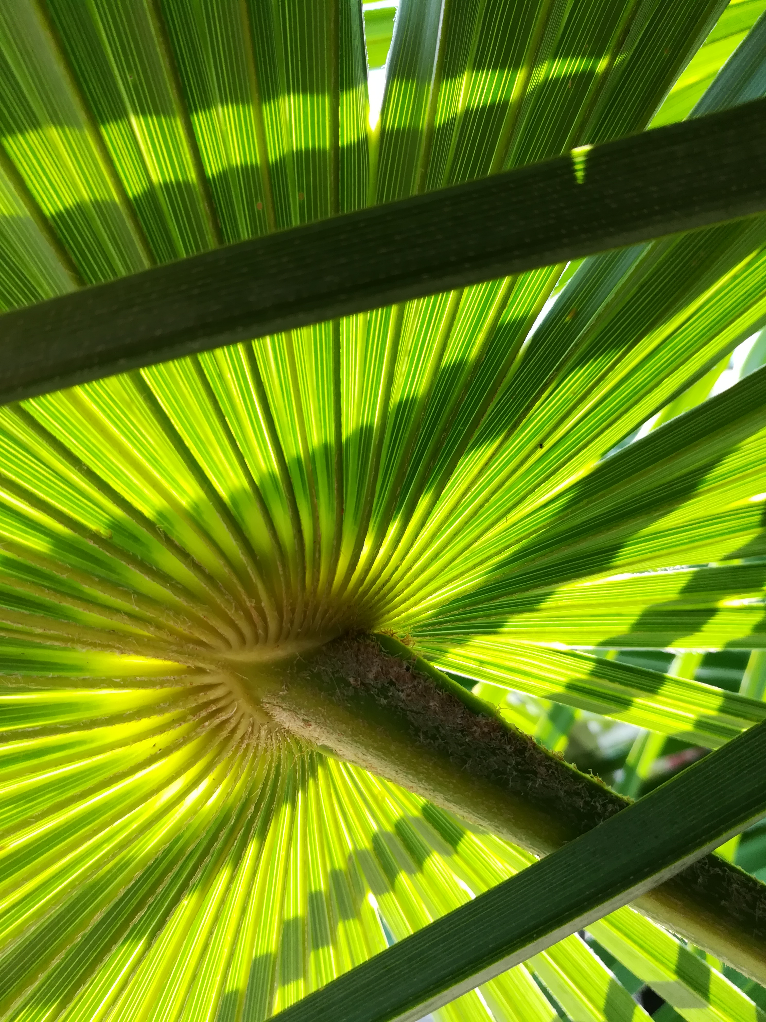 Inspiration palmier