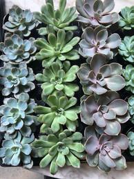 2in succulents.jpg