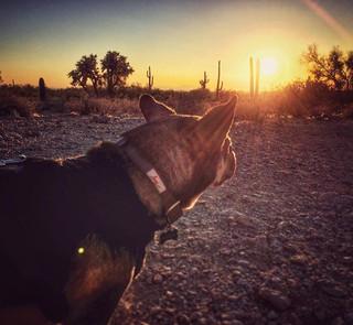 🌵🐶 #coop_ster #springtraining #arizona