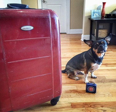 Cooper packed his suitcase with bones. (