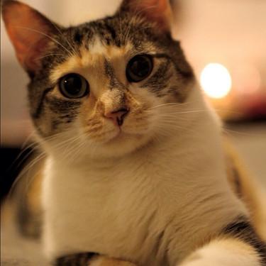 My lil kitten #cat #calico #adoptedcat.j