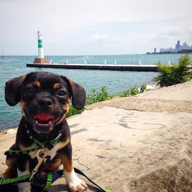 #coop_ster #puppiesofinstagram #dogsofin