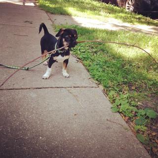 Walking stick #coop_ster.jpg