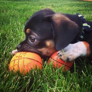 Cooper loves his basketballs.jpg