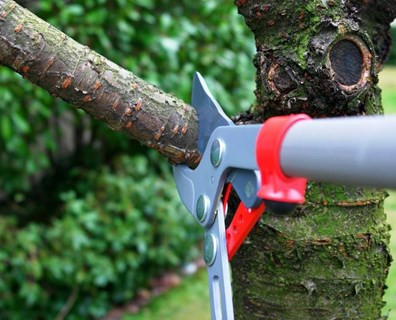 5 Unexpected Injuries From Trimming Your Own Trees
