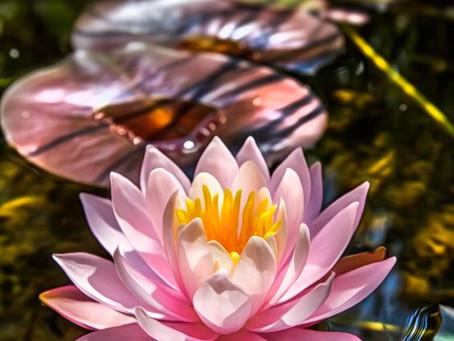 A Primavera da Paixão, do Elemento Água-Fogo!