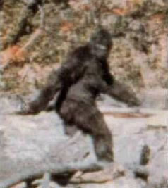 Image from Patterson-Gimlin footage