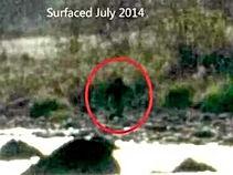 Possible Bigfoot sighting on shoreline