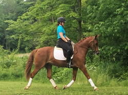 Sale horse Jupiter's Dream