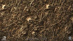 DeforestFloorStump_P