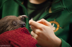 Authur the Sloth
