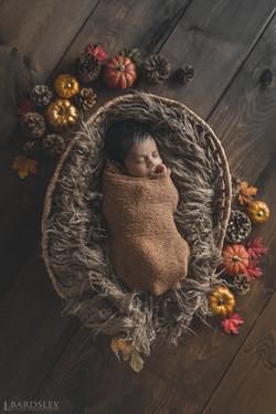 Fall Newborn