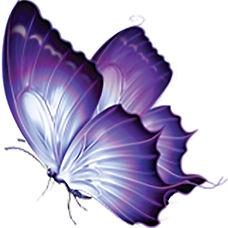 Purple Butterfly.jpg