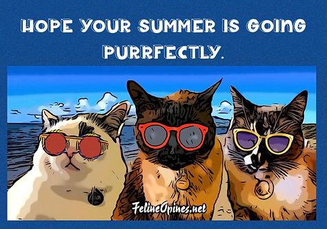 SunglassesPuds.jpg