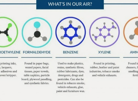 Don't fancy breathing in benzene? The top air-purifying houseplants approved by NASA.