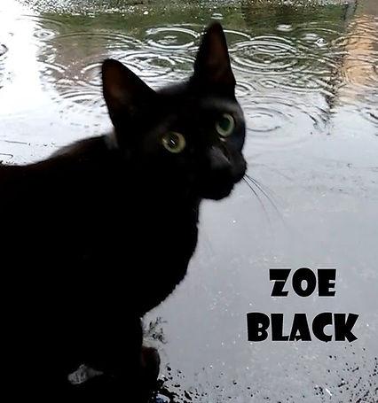 zoe black image.jpg