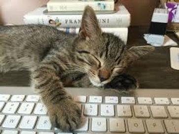 cat on keyboard.jfif