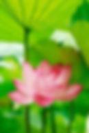 Anne-Laure Terrisse coach de vie, Anne-Laure Terrisse psychologue, coach de vie Brabant-wallon,coach de vie Louvain-la-Neuve, dépression, angoisse, gestion des émotions, manipulation, relations toxique, difficulté de couple, gestion de conflit, recherche de sens, accompagnement psychologique, coaching Louvain-la-Neuve