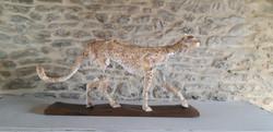 chesneau - guépard - 74 x 15 x h 38cm -.