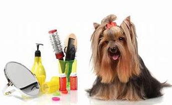 grooming.jpg