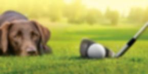 golfpic.jpg