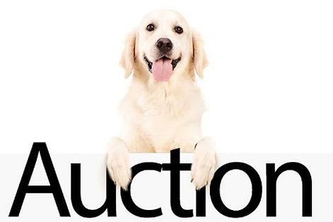 auctiondog.jpg