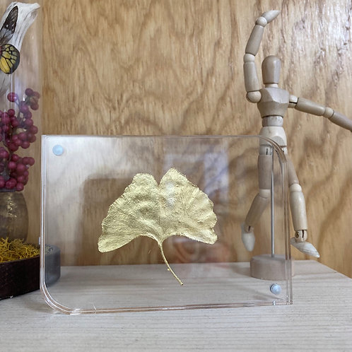 Feuille gingko séchée et dorée dans cadre transparent aimanté