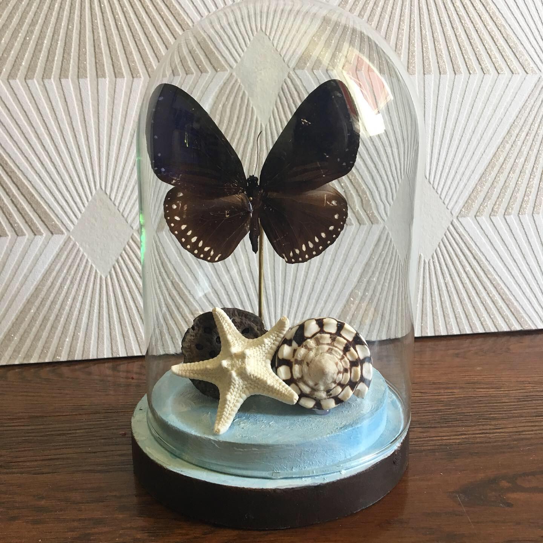 Papillon support bleu