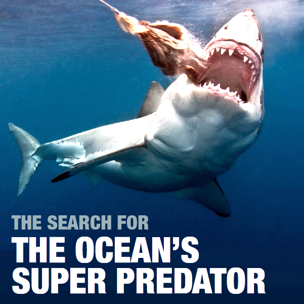 Search for the Oceans Super Predator B