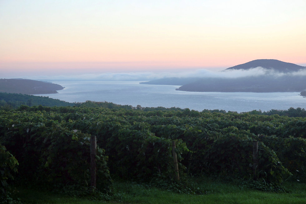 Sunrise_overlooking_a_vineyard_in_the_Fi