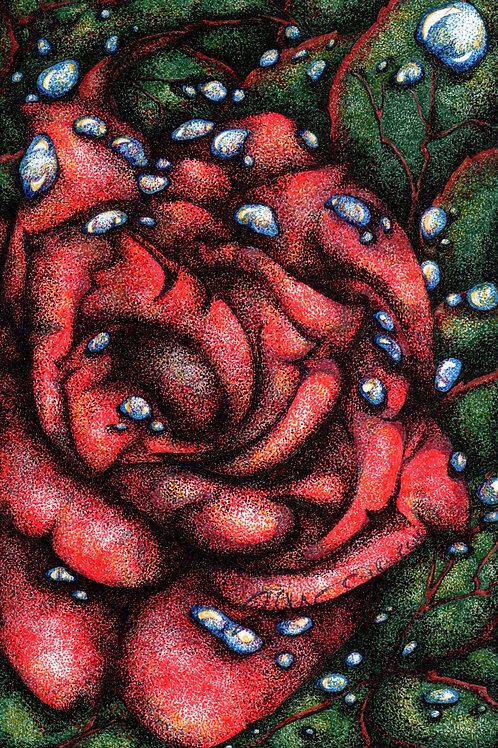A Rose *Print*
