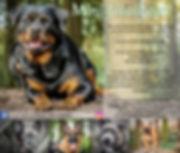 Mini fotoshoot hondenspeeltuinn-facebook
