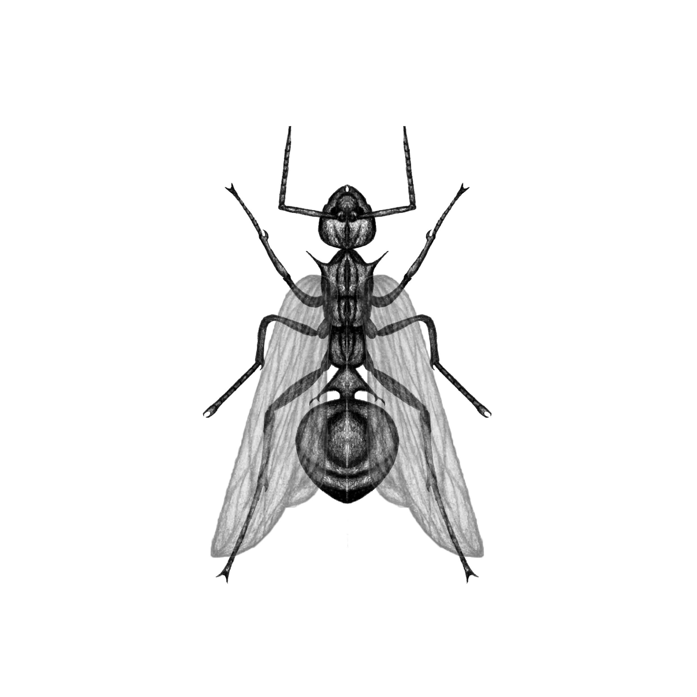蚂蚁.png