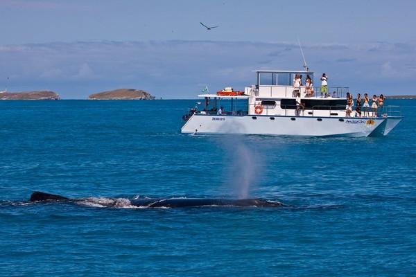 instituto baleia jubarte enrico marcovaldi