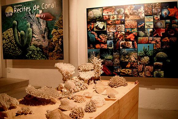 projeto-coral-vivo