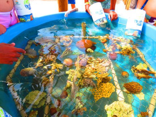 espaco-coral-vivo-mucuge