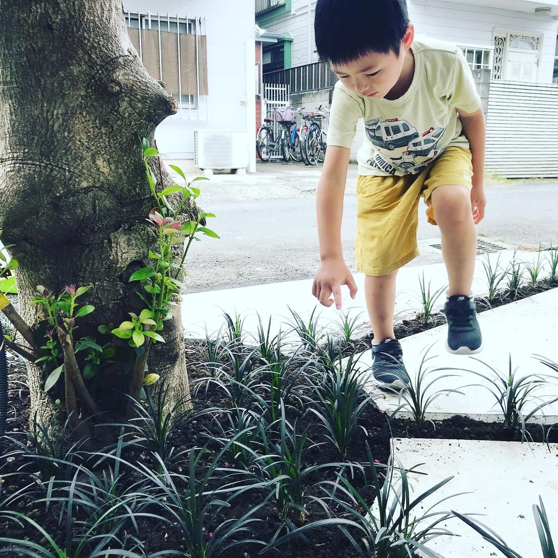 2020.8月植栽施工