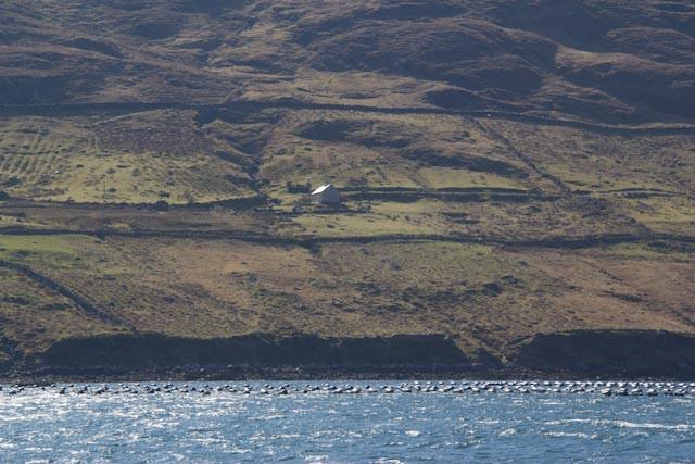 Killary Fjord Mussel Farm