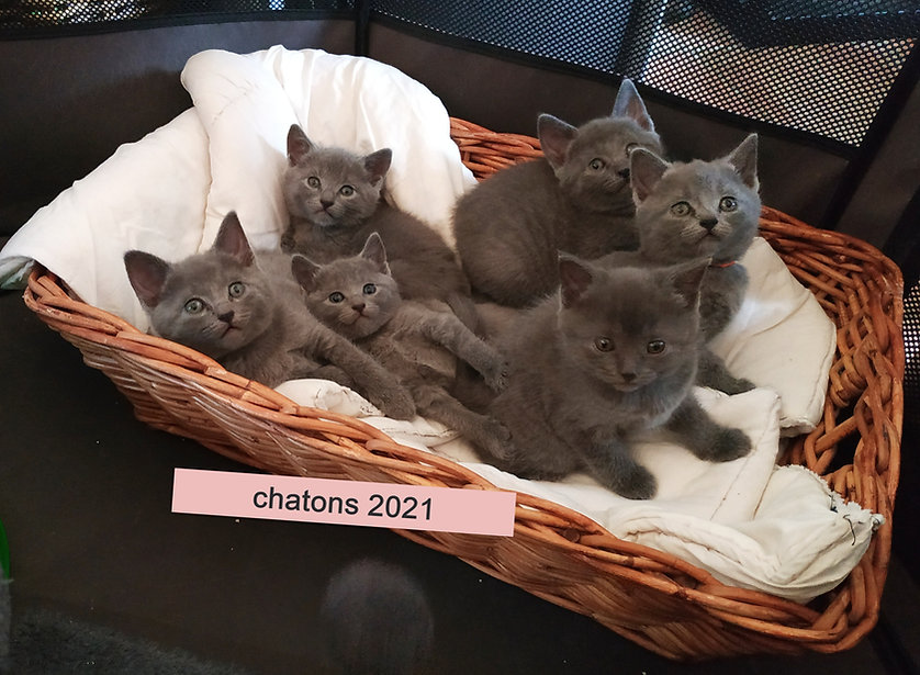 chatons%202021_edited.jpg