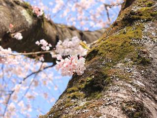 3/23(月)24(火)で大阪でのセッション可能です。 *3/14まで受付<終了しました>