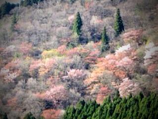 4/26(土)〜28(月)森の遠足vol.4@天川&洞川<終了しました>