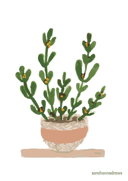 Natural home - Pot plant