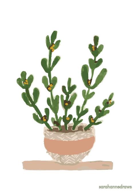 Natural home - Pot plant