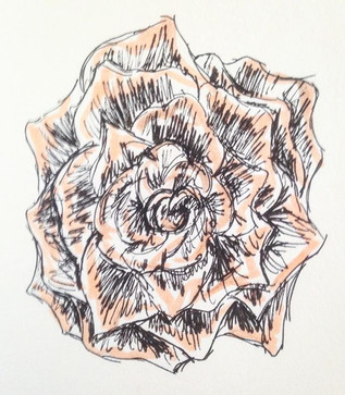 Morning rose _#drawingaday #saturdaymorn