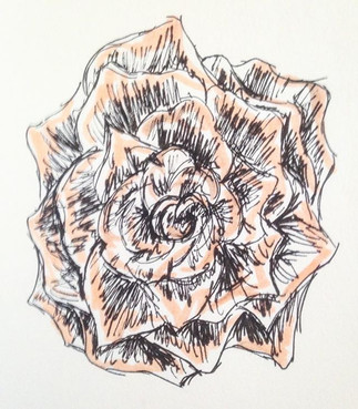 Morning rose... Drawing a day